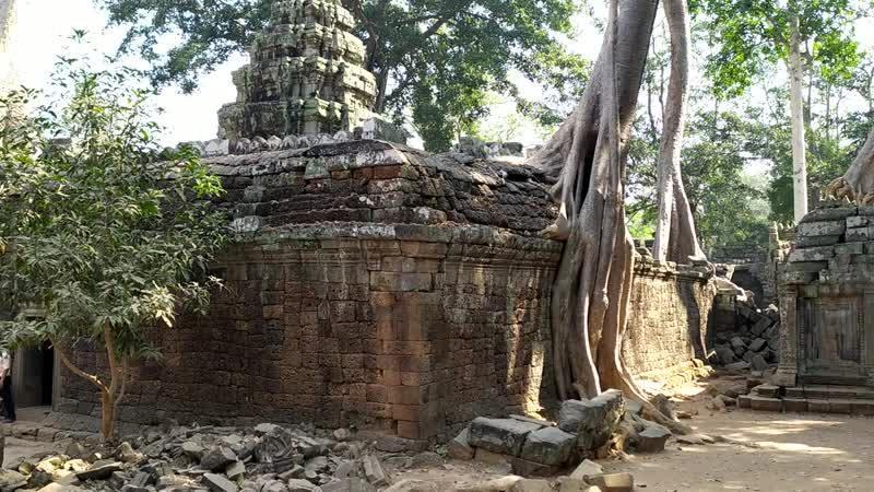 2 Храм Анджелины Джоли Храм Та Пром Ангкор Камбоджа