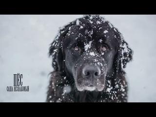 Саша Незнакомый  Пёс /это может последние видело если да пока удачи вам во всем жизни и любви