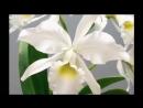 Орхидеи для Кристины в День Рождения!