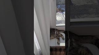 Битва без правил двух котов! Смотреть всем!