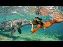 Самое красивое видео. Девушка и подводный мир океана. Музыка для релаксаци