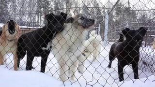 Работа Новосибирского центра по проблемам домашних животных