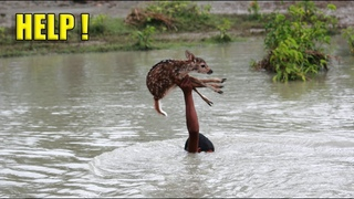 Уникальные кадры спасения животных. Люди помогают животным оказавшимся в беде #2