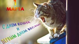 1 Марта С Днем кошек и Первым Днем весны/Слайд-шоу/Прикольное поздравление!