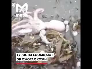 Побережье Камчатки усеяно трупами морских животных