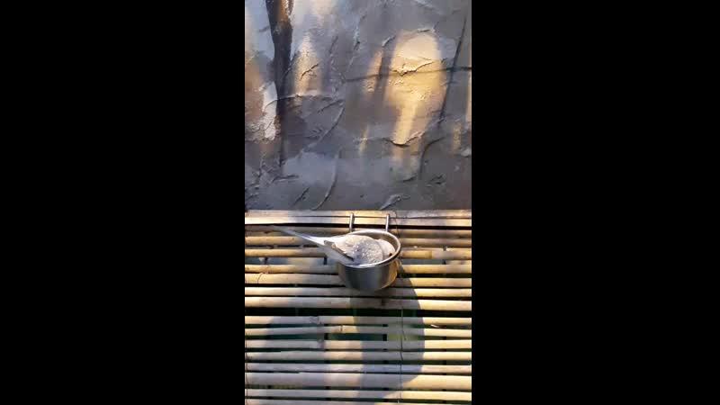 Брилиантовая горлица Амазония Лимпопо