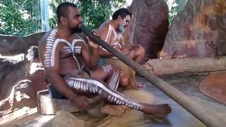 Абориген в Австралии играет на диджериду без остановки