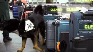 X-Ray Mega Airport: Drug Sniffing Dog