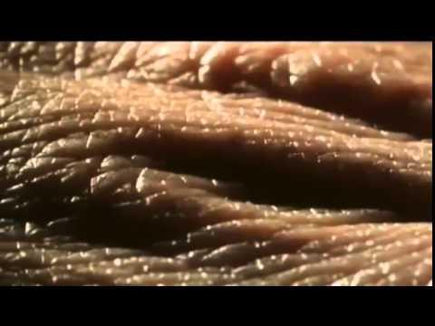 Вселенная нашего тела микрокосмос Как устроен мир внутри нас Моя планета под названием человек