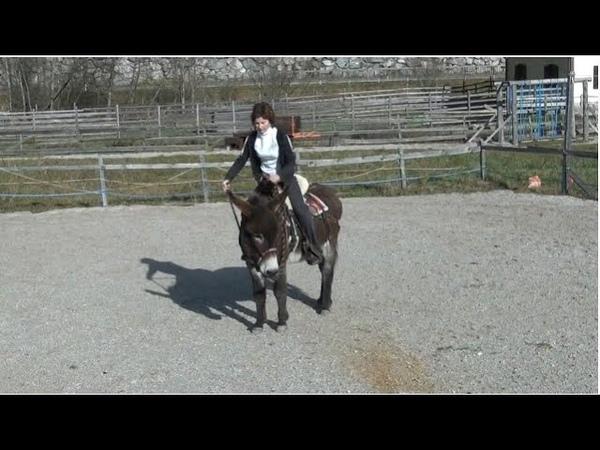 Trick Riding with Donkey ponyboy