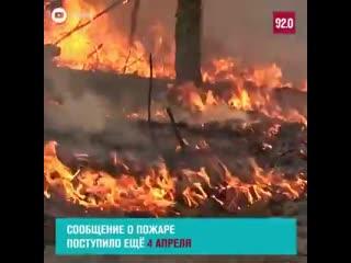 Лесные пожары в Чернобыле. Пожар подобрался к запретному лесу и уже недалеко от хранилища радиоактивных отходов. Задолбали эти с