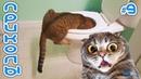 Приколы с Котами и Кошками 2019 Смешные Коты и Кошки 2019 Приколы с Животными 9