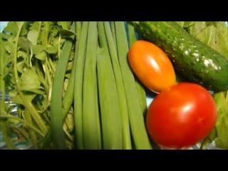 Как перевозим высокую рассаду.  Высаживаю томаты и тыкву в теплице.  Первый урожай!