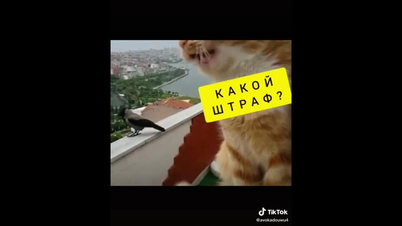 Video-6797946817e9810e31dc1a29820e02ec-V.mp4
