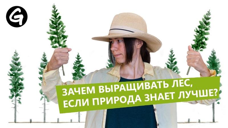 Зачем человеку выращивать лес, если природа умеет это делать сама