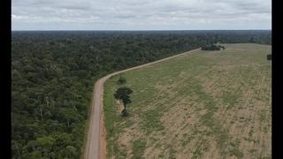Campos de Veneno: soja na floresta amazônica