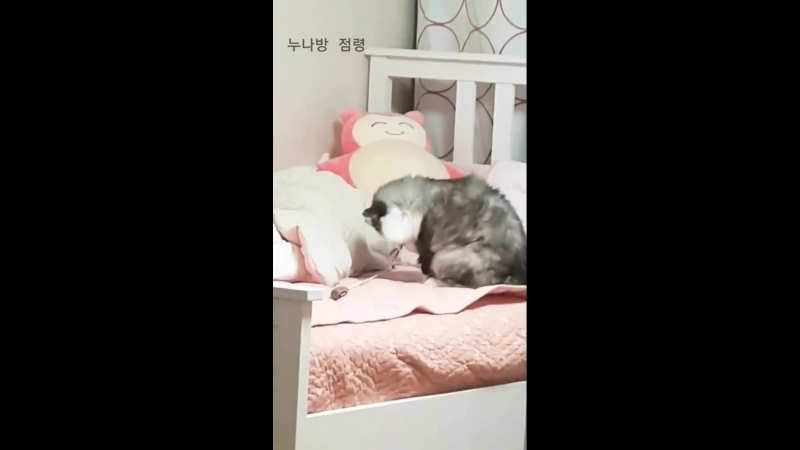 STREAM 180719 180725 Riu Hyeontae InstaStory cat Woori