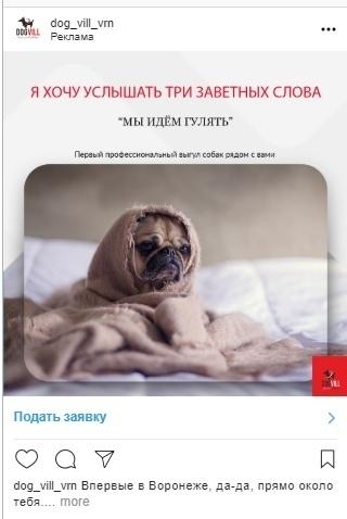 Кейс: продвижение стартапа по выгулу собак, изображение №16