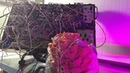 Five Minutes of Pink Oyster Mushroom Playing Modular Synthesizer