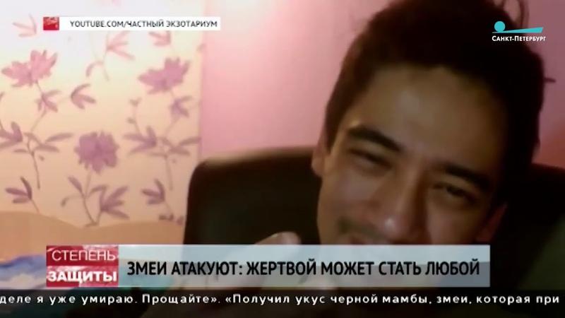 Змеиный беспредел В Петербурге отмечают аномальное поведение гадюк