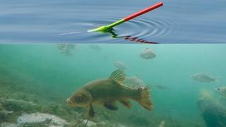 ОПУСТИЛ КАМЕРУ ПОД ВОДУ, А ТАМ... Рыбалка линя на поплавок