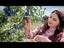 Украинка удивила Таджиков песней на таджикском. Песня Нигины, ту бигу