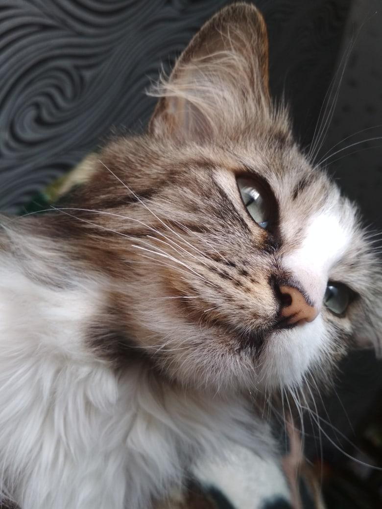 ❌❌❌Пропала кошка, кто видел, и  знает её место нахождения,  огромная просьба  сообщить за вознаграждение❌❌❌