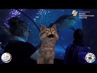 Инватур в г.Когалым 2021г. Коронавирус не помеха?  Все узнаем вместе с котом Панфутенком!