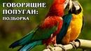 ГОВОРЯЩИЕ ПОПУГАИ Подборка Смешные видео с животными Попугаи