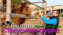 Страусиная ферма Ямполь Контактный зоопарк Лиман