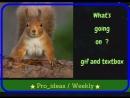 Выпуск 6 Gif and textbox
