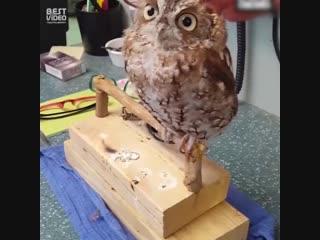 Все любят массаж