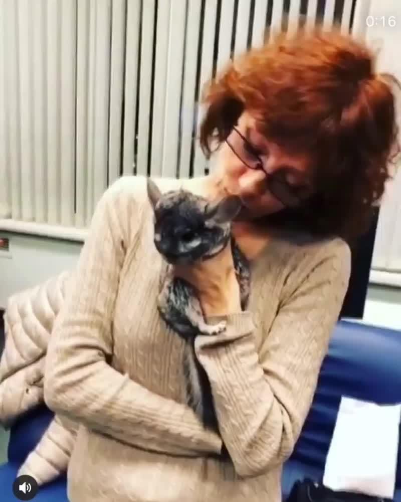 Ольга Зарубина с шиншиллой