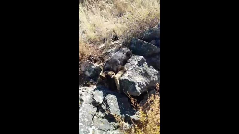 собакай на скалах