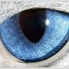 OCULUS-офтальмология для животных