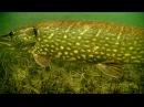 Cannibal pike full video underwater attacks on fishing lures for muskie gädda snoek haug lucio