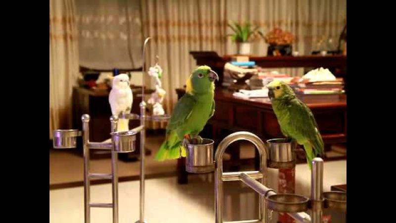 ◆鸟唱:妹妹你坐船头 中间忘词,后又想起 zia