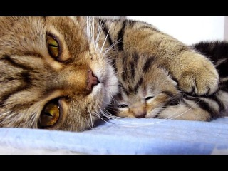 Mom Cat talking to her Cute Meowing Kittens | Generation P