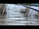 Pescuit caras la balta Gliganu de Sus 30 04 2015 partea 2 a