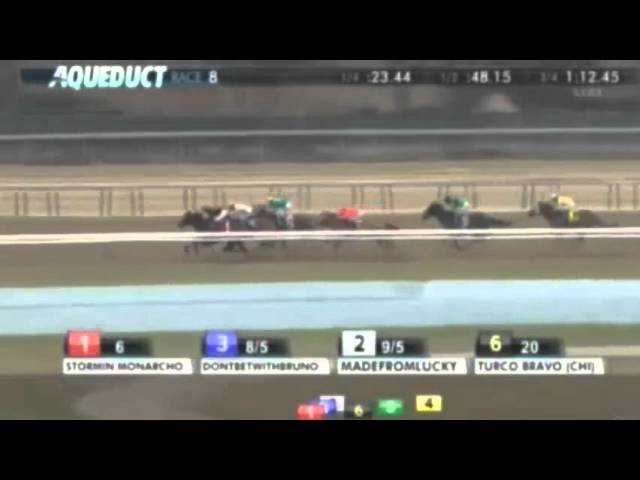 2016 Stymie Stakes Turco Bravo CHI Aqueduct 13 Mar 2016