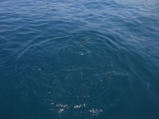 Красивые голодные рыбки.