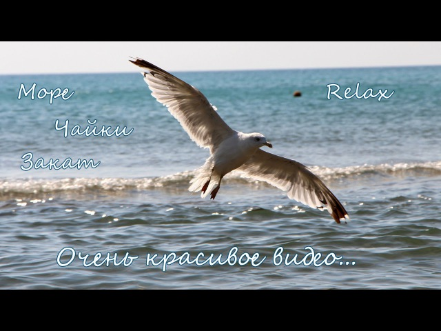 красивое видео море чайки