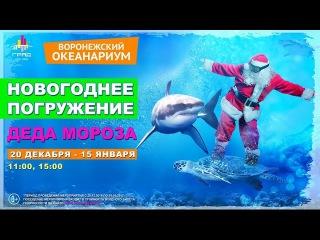 Новогоднее погружение Деда Мороза в Воронежском океанариуме