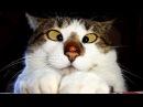 КОТЫ ПРИКОЛЫ 2016 СМЕШНЫЕ КОТЫ Funny Cats 2016 ТОПОВАЯ ПОДБОРКА