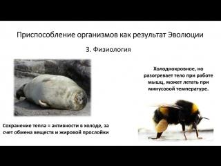 20.1 Эволюция IV - Доказательства часть I (9 класс) - биология, подготовка к ЕГЭ и ОГЭ