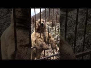 Покажи как медведь Тима стесняется