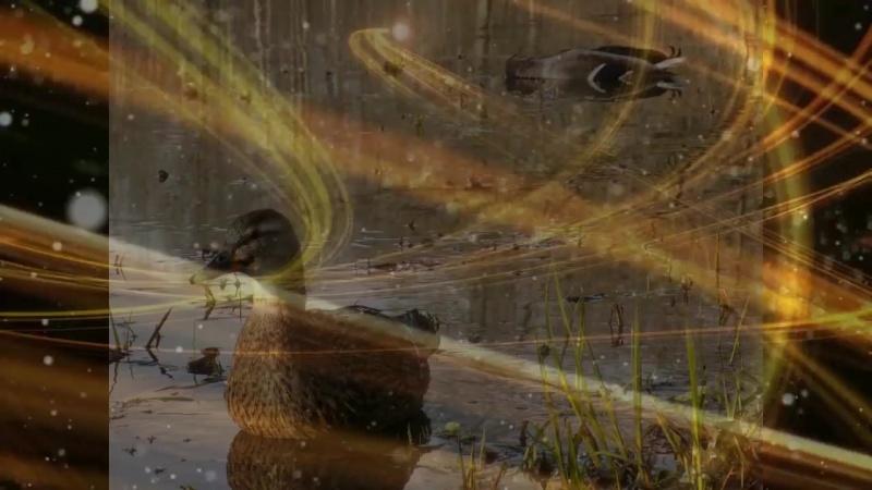 Весенняя охота с подсадной уткой 2018