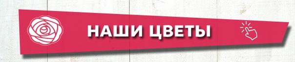 vk.com/album-102600823_248609219