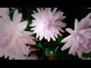 Мастер-класс хризантема кустовая из фоамирана