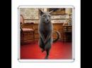 ЛУЧШИЕ ПРИКОЛЫ с котами Самые смешные видео про кошек и котов Подборка приколов